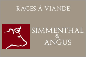 Simmenthal-Angus